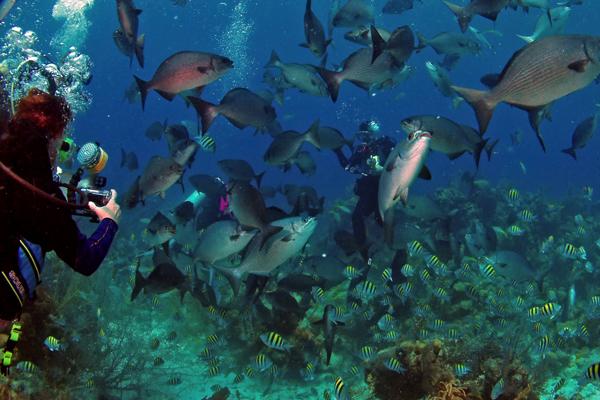 http://eaglepointresort.com.ph/marine-life-famous-anilao-batangas-beach-resort-philippines/