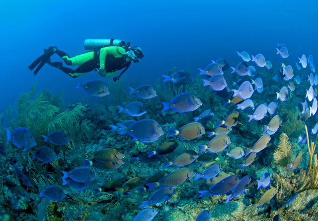 diver and tangs
