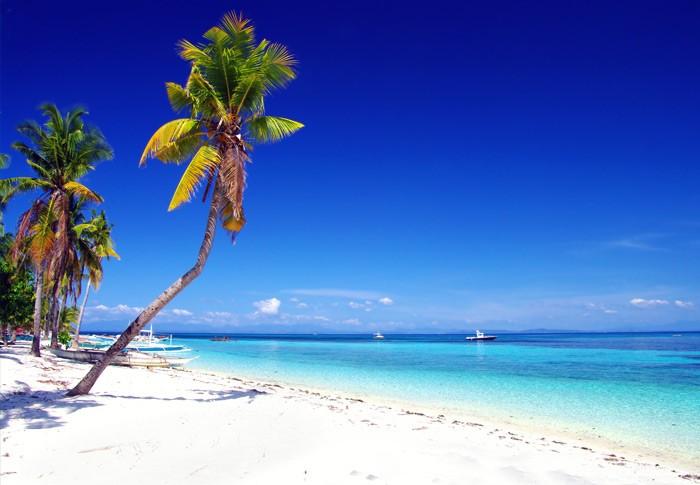 http://9pixs.com/malapascua-island-malapascua-island-gallery-ocean-vida-2014/