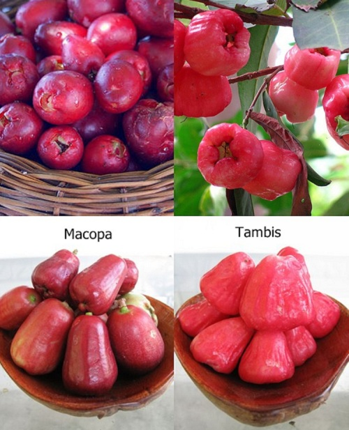 http://www.marketmanila.com