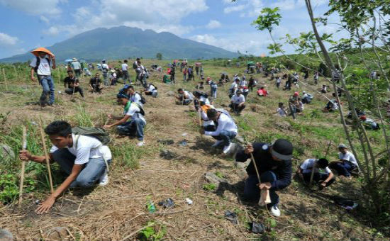 Most Trees Planted