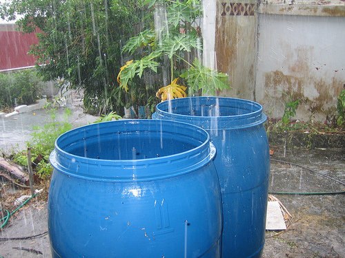 Collect Rainwater