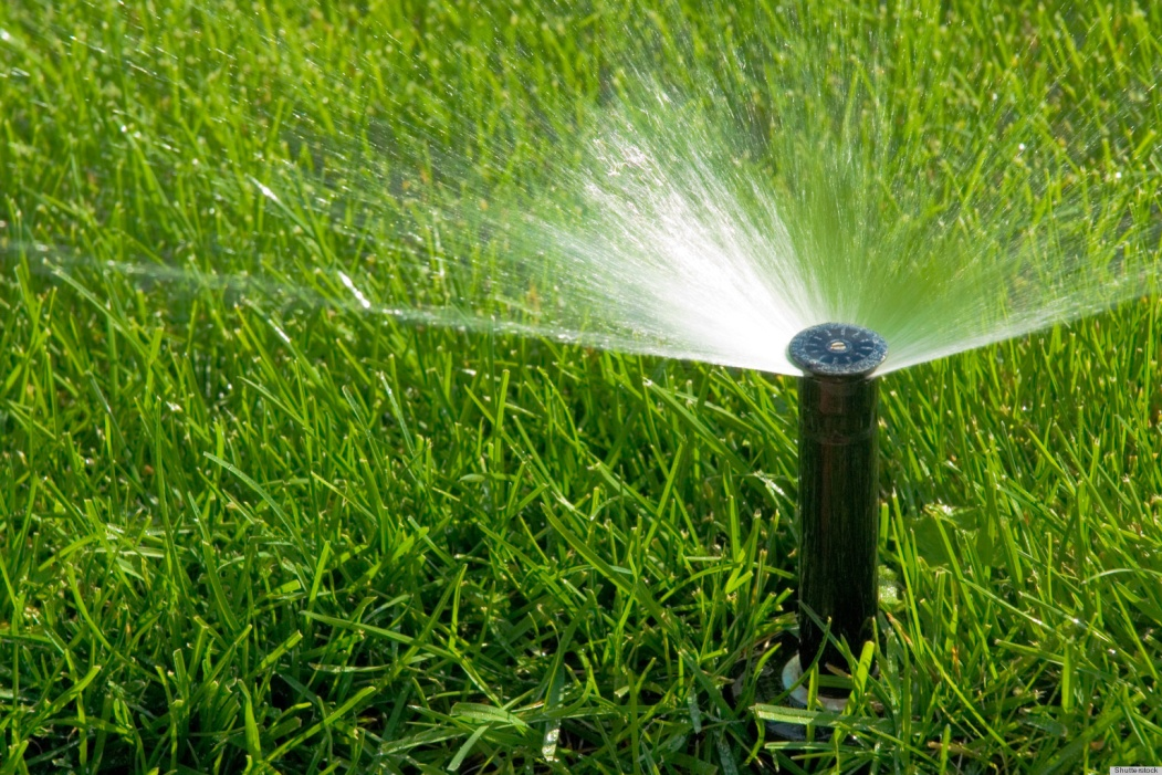 Water your Lawn only when Necessary