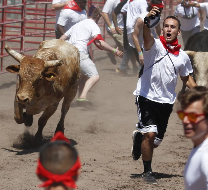 "Participant attempts to take a ""selfie"" with a bull during ""The Great Bull Run"" at the Alameda County Fairgrounds in Pleasanton"